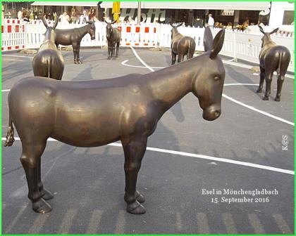 Esel in Mönchengladbach